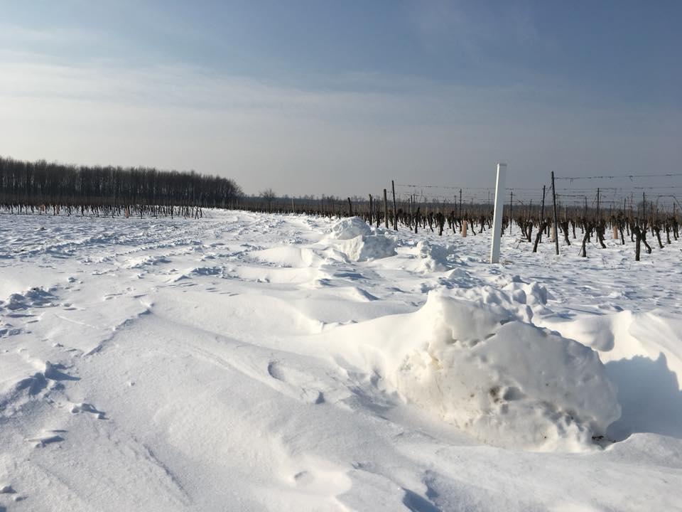 Winter im alten Weingebirge